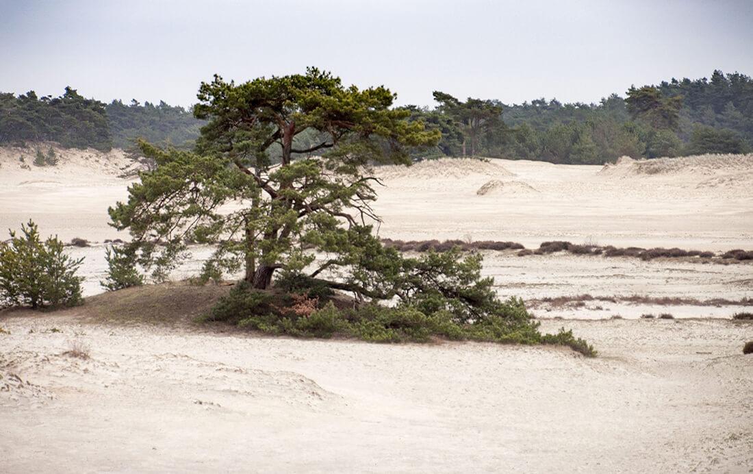 fietsroute langs de Nederlandse Sahara