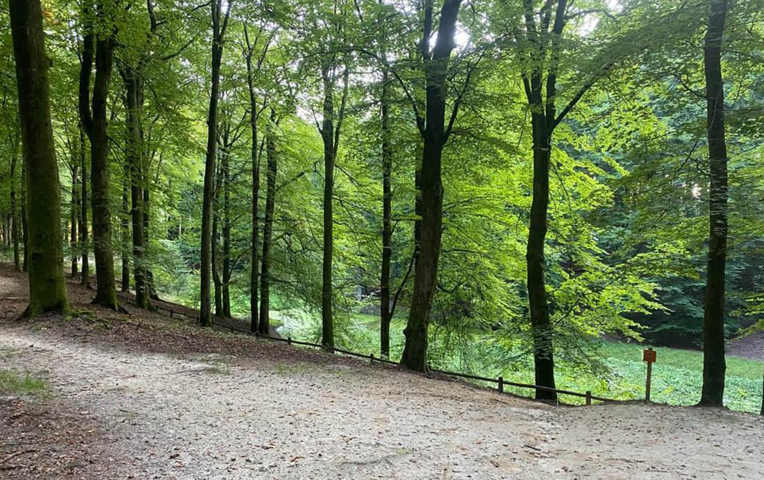 Fietsroute met kromme wegen en bomen