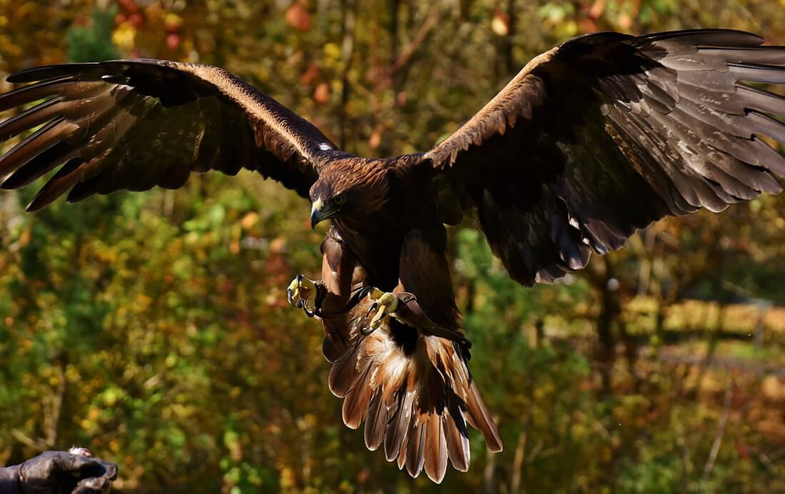 Fiets tips | Wat te doen bij een aanval van een roofvogel?