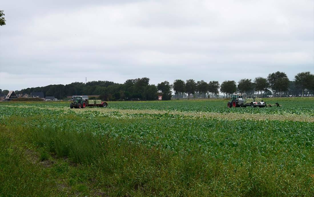 Kolenoogst Noord-Holland
