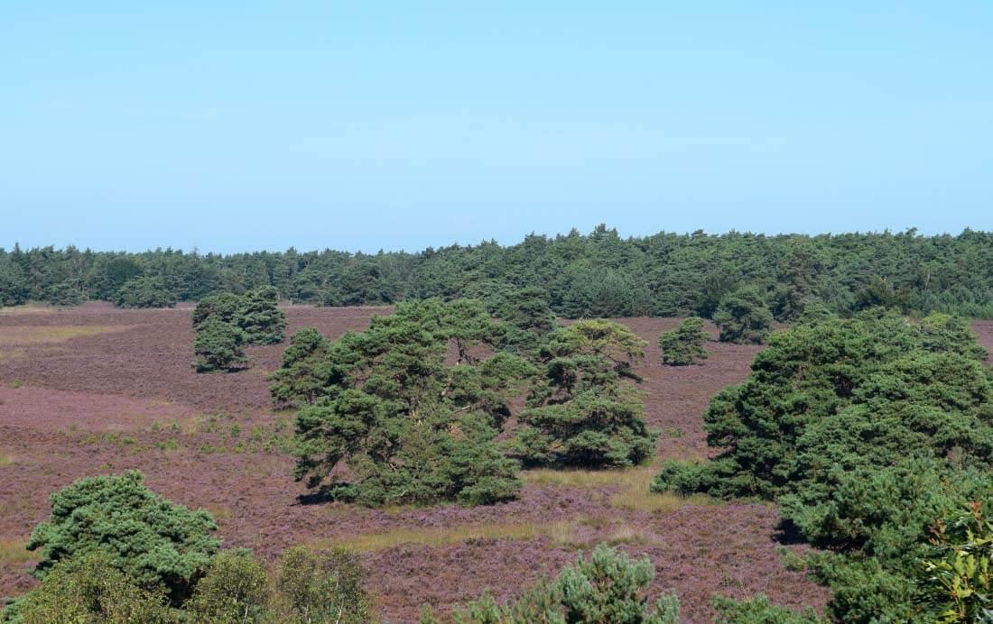 Uitzicht vanaf de Haelberg