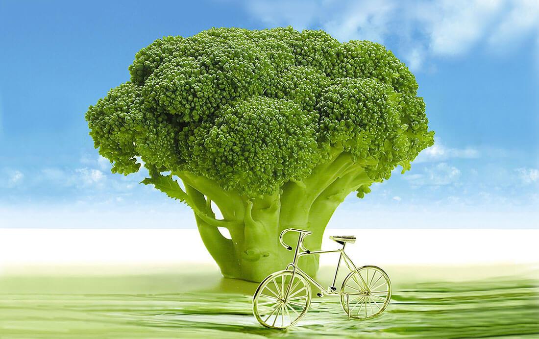 Biologische fietsroutes
