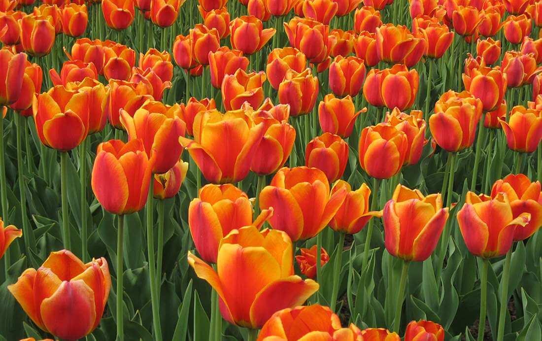 Oranjeroutes: Fietsroutes voor het oranjegevoel